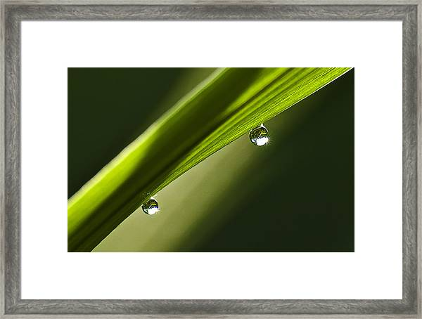 Two Dew Drops On A Blade Of Grass Framed Print by Michael Whitaker