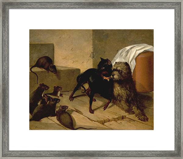 Two Dogs Cowering Before Rats Framed Print