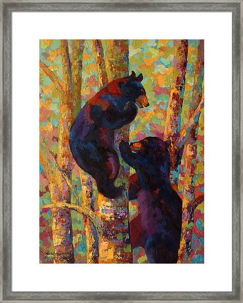 Two High - Black Bear Cubs Framed Print