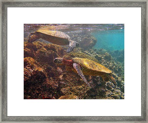 Two Honu On The Reef Framed Print