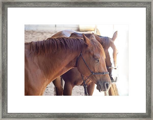 Two Horses Framed Print