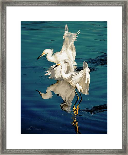 Two In Tandem Framed Print