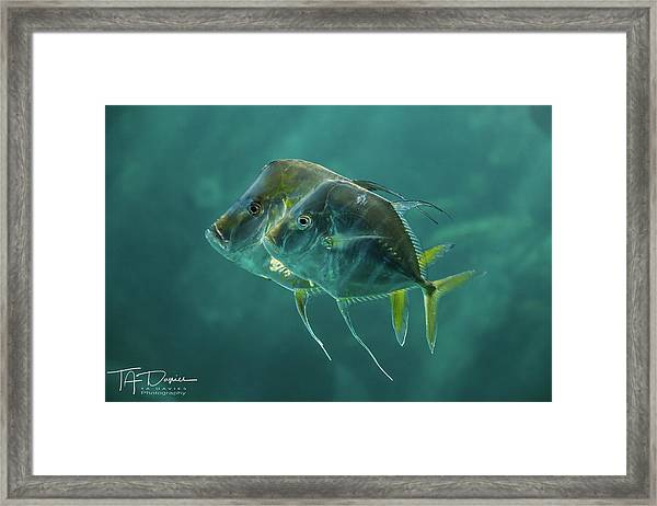 Two In Turquoise Framed Print