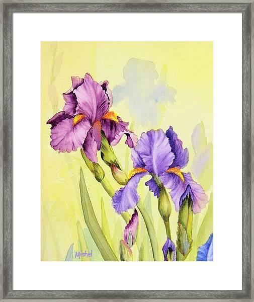 Two Irises  Framed Print