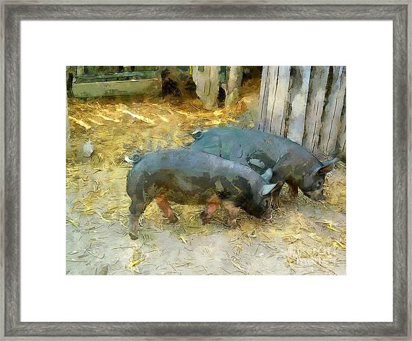 Two Little Pigs Framed Print