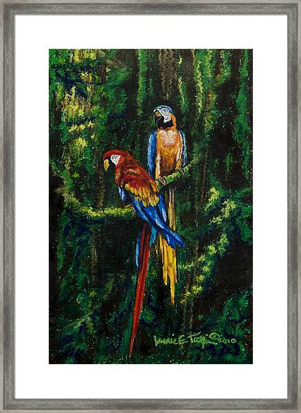 Two Macaws In The Rain Forest Framed Print