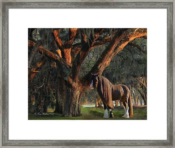 Two Majestic Souls Framed Print