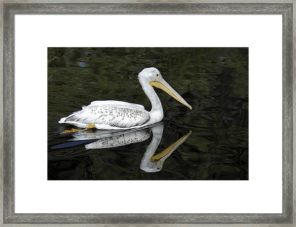 Two Pelicans Framed Print
