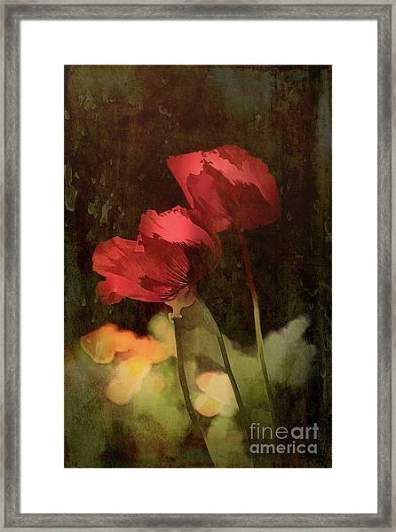 Two Poppies Framed Print