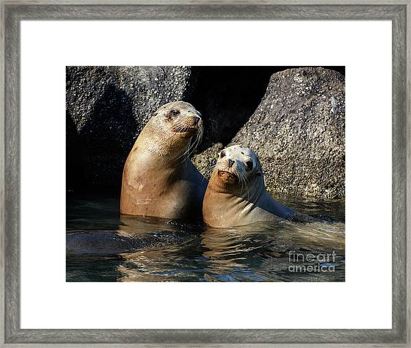 Two Quiet Sea Lions Framed Print