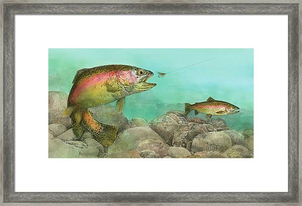 Two Rainbow Trout Framed Print