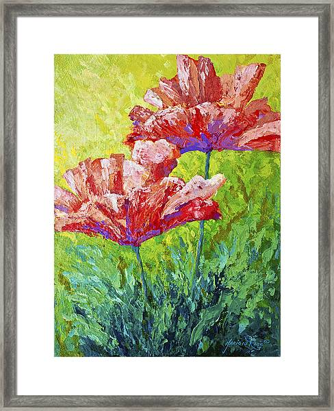 Two Red Poppies Framed Print