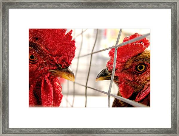 Two Roosters Framed Print by Mark Stevenson