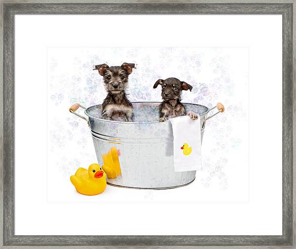 Two Scruffy Puppies In A Tub Framed Print