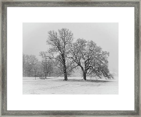 Two Sister Trees Framed Print