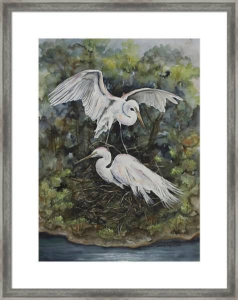 Two Snowy Egrets Framed Print