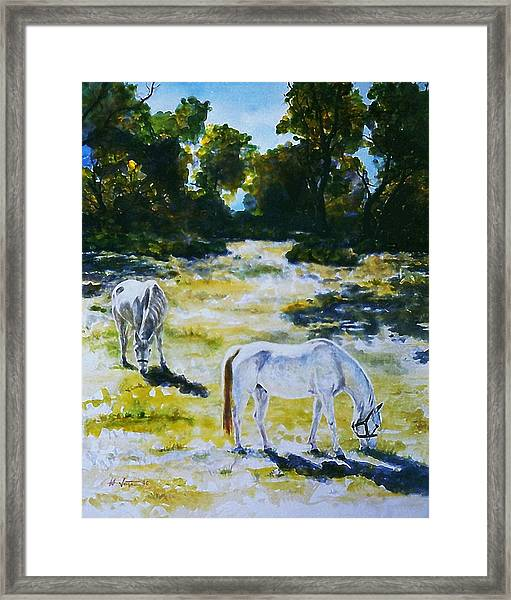 Sunlit Framed Print