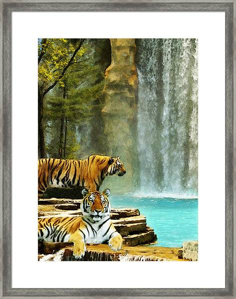 Two Tigers Framed Print