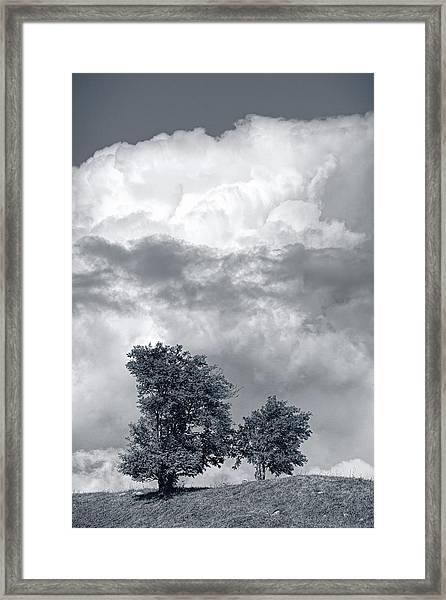 Two Trees #9249 Framed Print