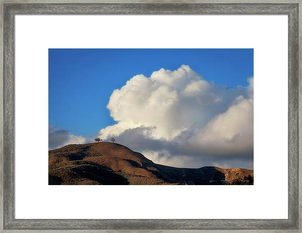 Two Trees At Ventura, California Framed Print