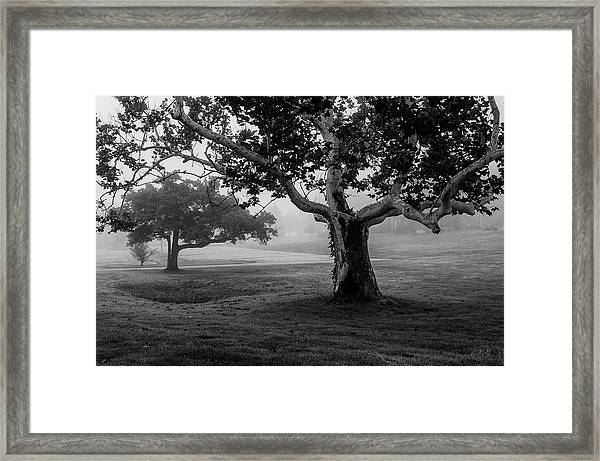 Two Trees Colt State Park Framed Print