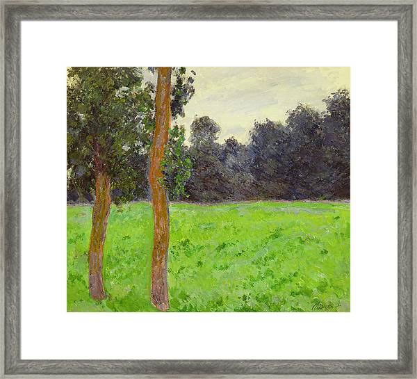 Two Trees In A Field Framed Print