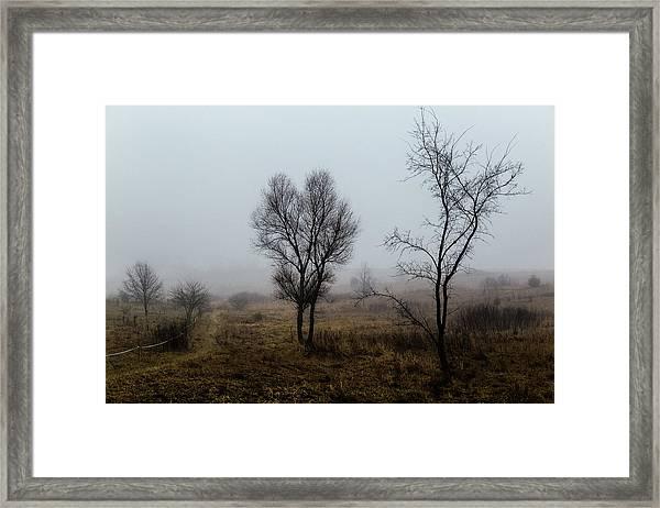 Two Trees In The Fog Framed Print