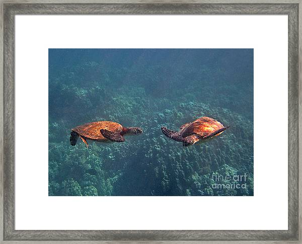 Two Turtle Tango Framed Print