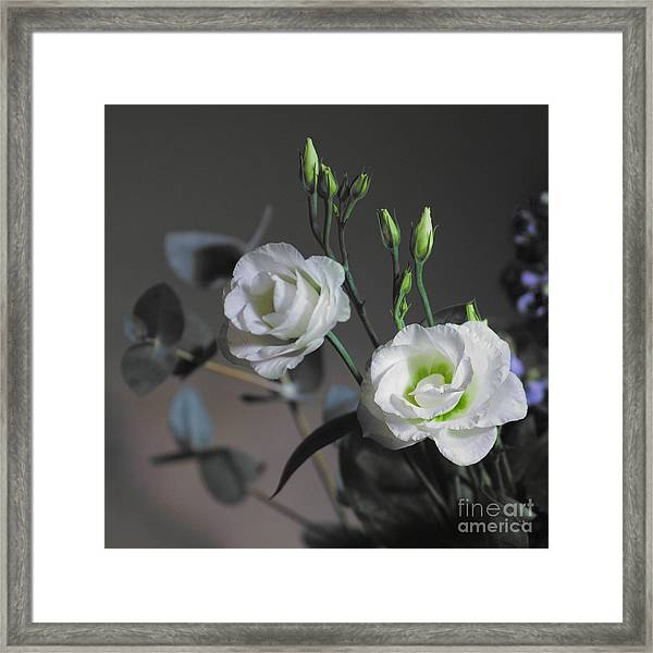 Framed Print featuring the photograph Two White Roses by Jeremy Hayden