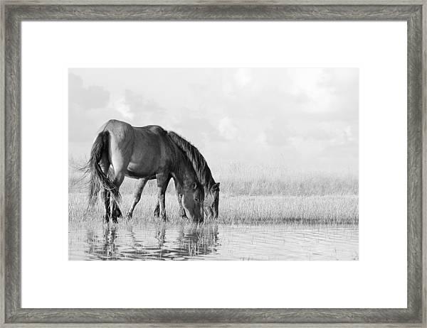 Two Wild Mustangs Framed Print