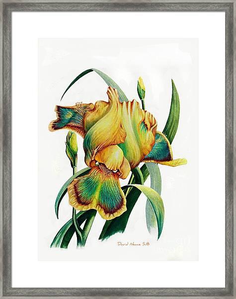 Tye Dyed Framed Print