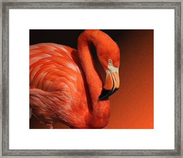 Ultimate Orange Framed Print