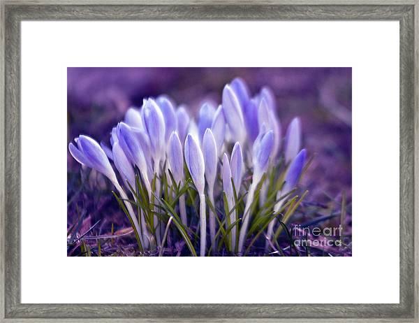 Ultra Violet Sound Framed Print