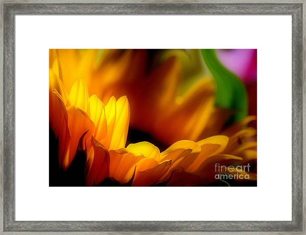 She Was An Unassuming Beauty Framed Print