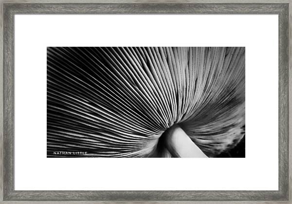 Under A Mushroom Framed Print