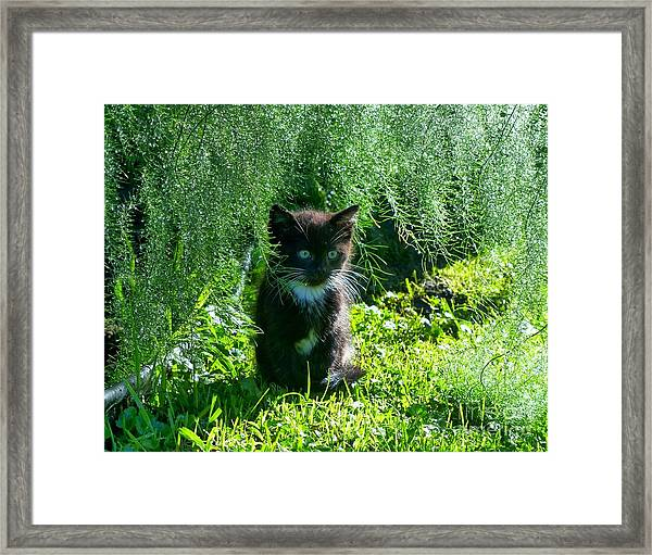 Kitten Under The Asparagus Ferns Framed Print