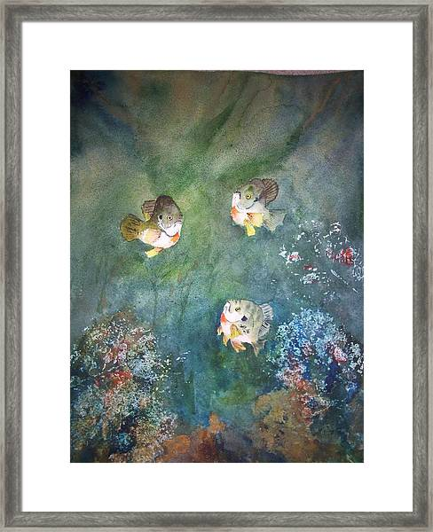 Under The Surface - Gills Framed Print
