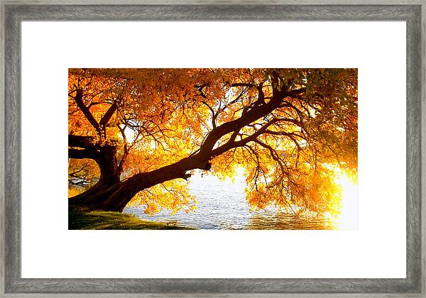 Under The Yellow Tree Framed Print