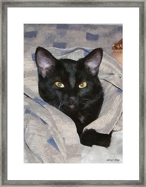 Undercover Kitten Framed Print