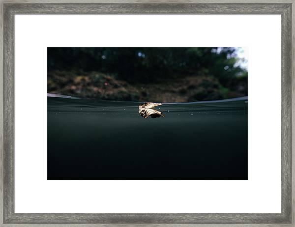 Underwater Leaf Framed Print