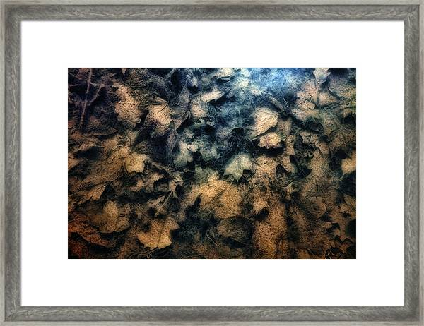 Underwater Leaves Framed Print