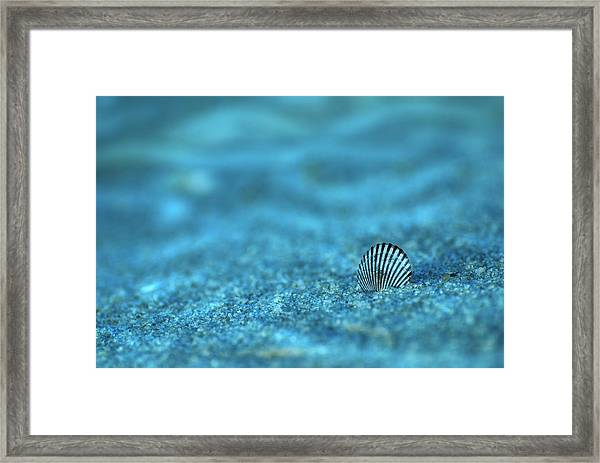 Underwater Seashell - Jersey Shore Framed Print