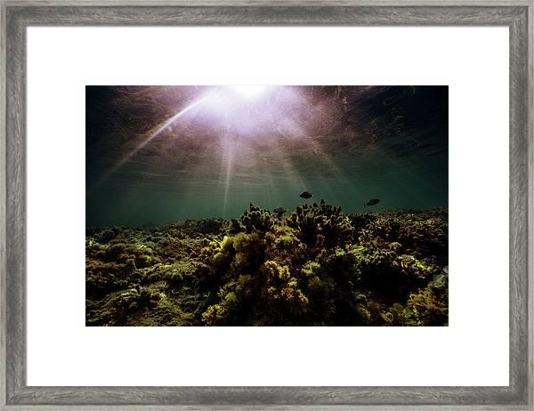 Underwater Sunset Framed Print