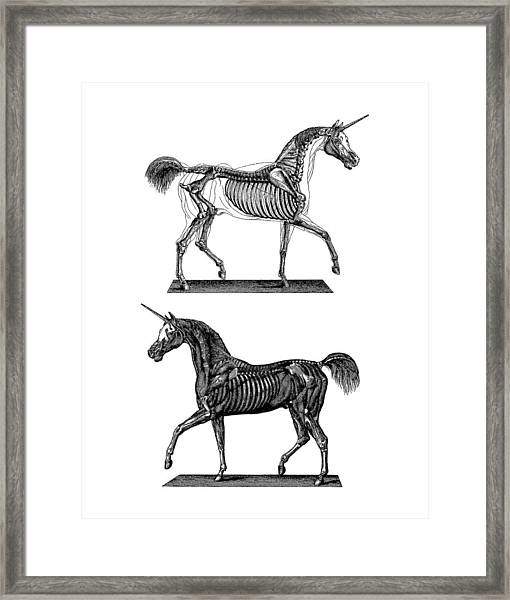 Unicorn Anatomy Framed Print
