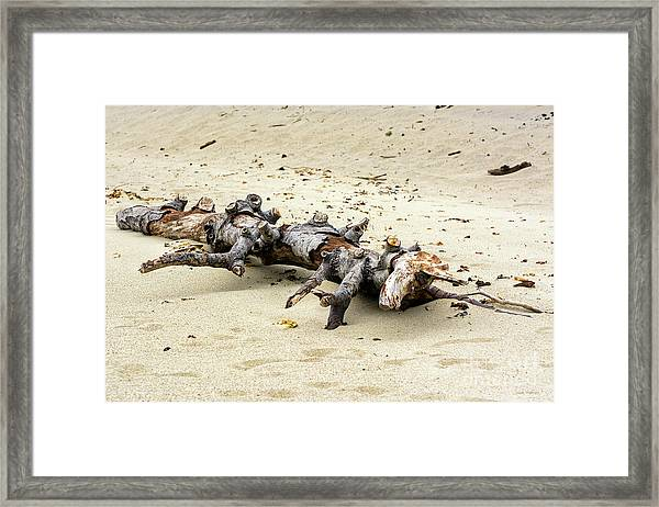 Unicorn Resting On A Beach Framed Print