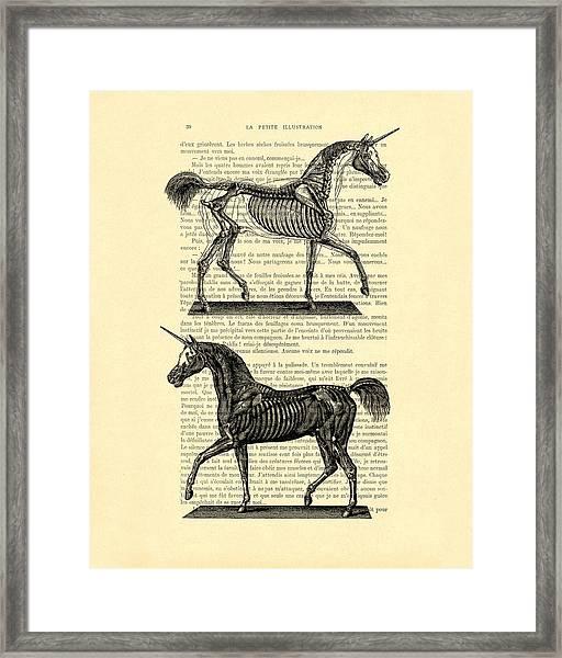 Unicorns Anatomy Framed Print