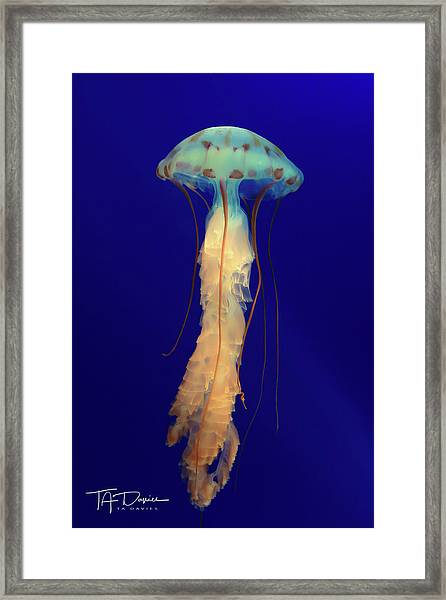 Unidentified Floating Obejct Framed Print