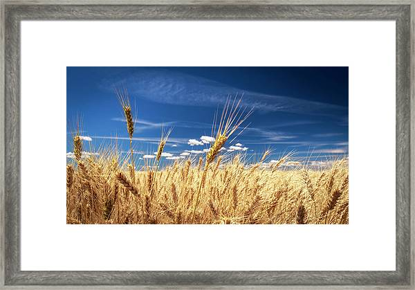 Unruly Beauty Framed Print