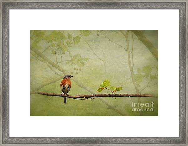 Framed Print featuring the photograph Until Spring by Lois Bryan