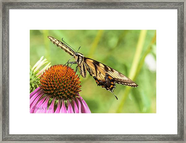 Untitled Butterfly Framed Print